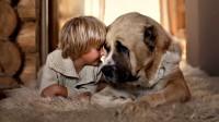 Как перестать бояться собак? Это фобия или здравый смысл?